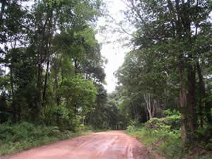 ラタナキリへ続く道